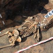 Szczątki ludzkie ofiary tragedii z 1354 r. w piwnicy jednego z domostw przysypane pogorzeliskiem 1