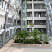 Zdjęcie tropikalnych roślin znajdujących się na parterze Wydziału Biologii UG.